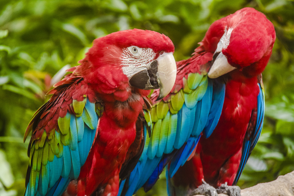 photoblog image Red and Blue Macaw