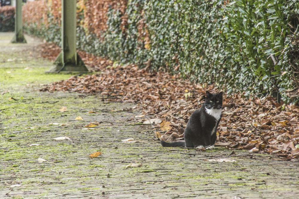 photoblog image Feline Inspector